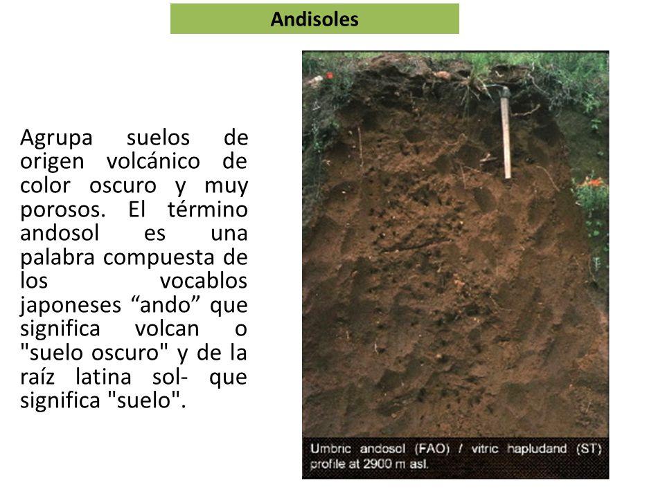 Andisoles