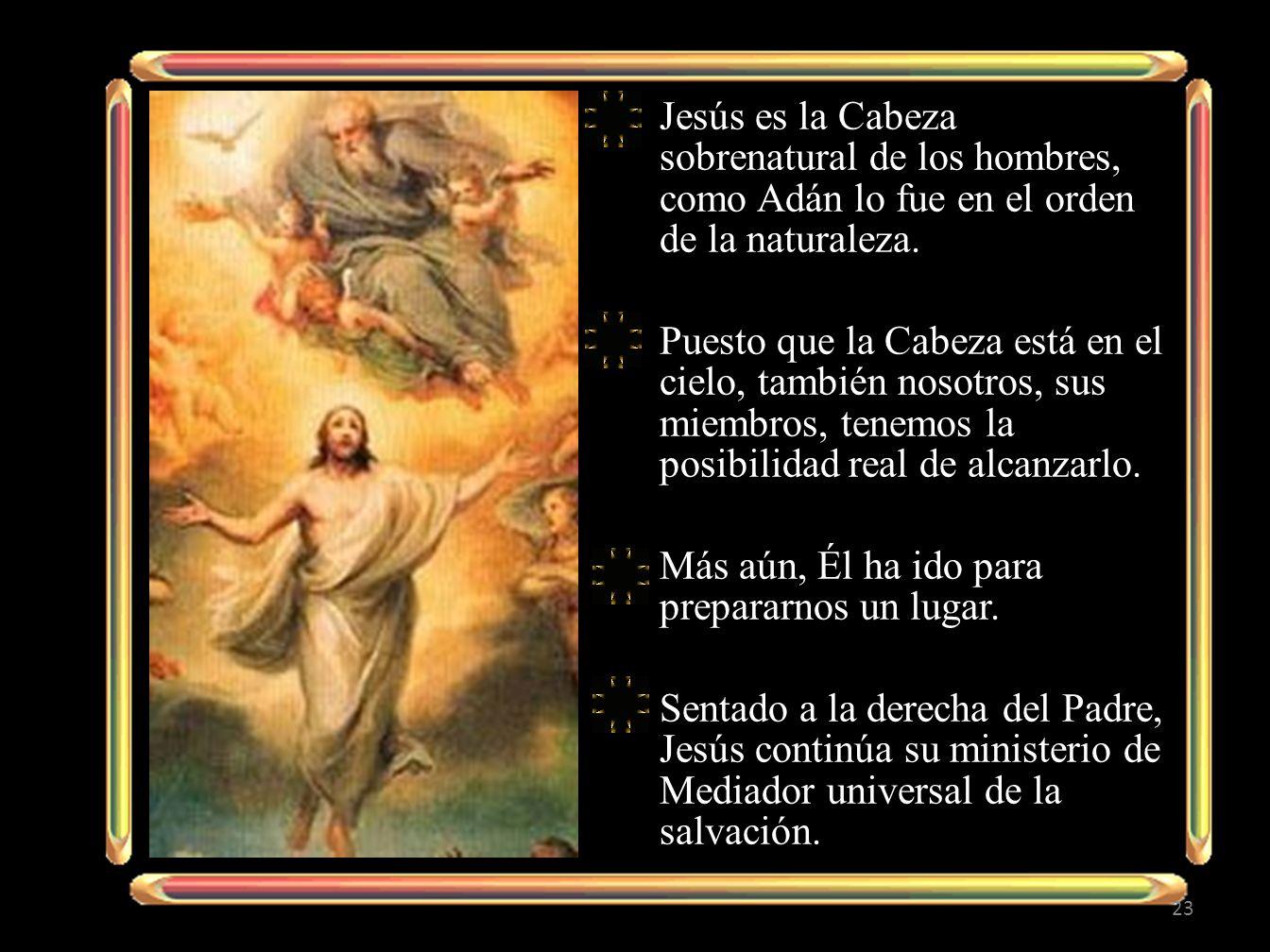 Jesús es la Cabeza sobrenatural de los hombres, como Adán lo fue en el orden de la naturaleza.