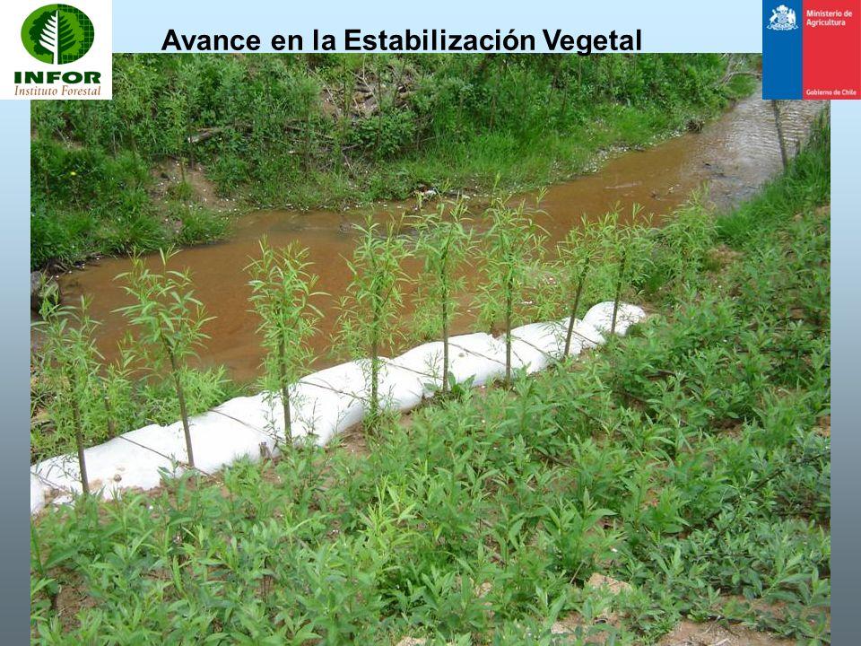 Avance en la Estabilización Vegetal