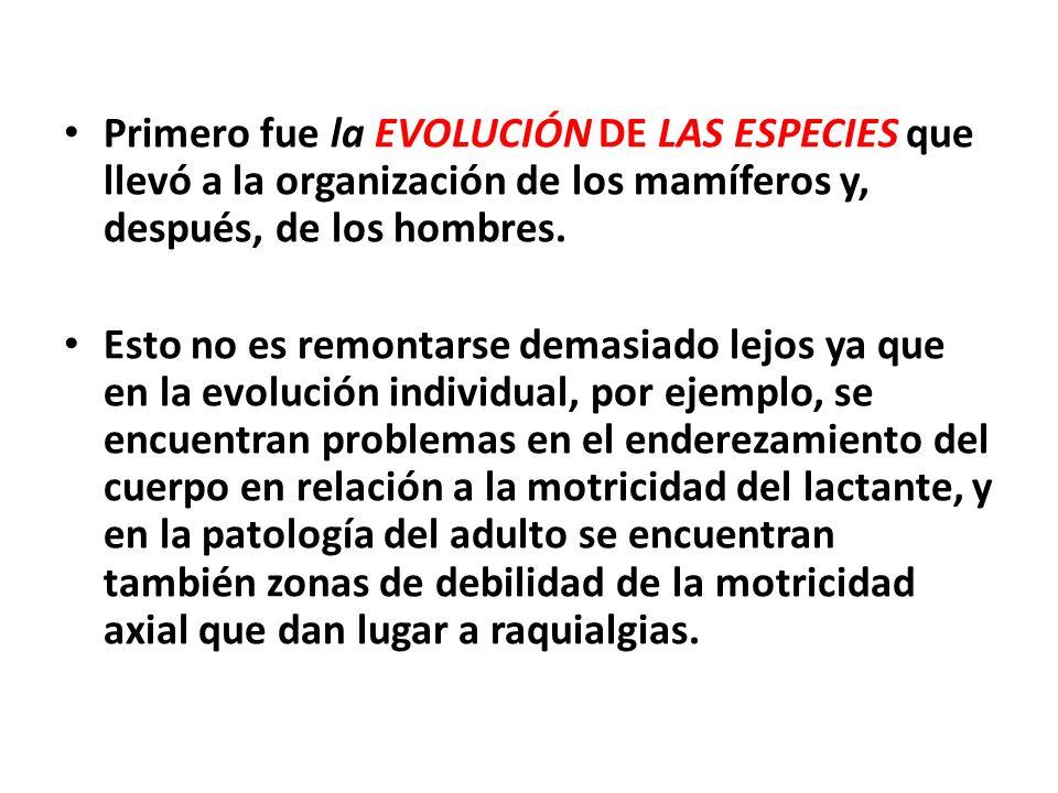 Primero fue la EVOLUCIÓN DE LAS ESPECIES que llevó a la organización de los mamíferos y, después, de los hombres.