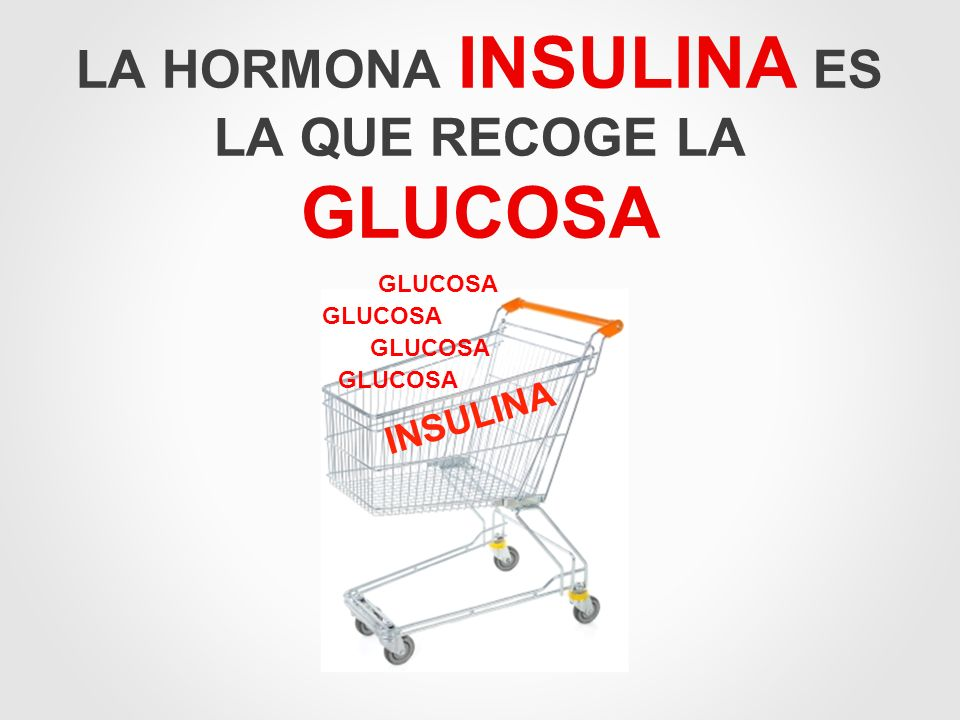 LA HORMONA INSULINA ES LA QUE RECOGE LA GLUCOSA
