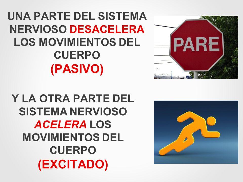 UNA PARTE DEL SISTEMA NERVIOSO DESACELERA LOS MOVIMIENTOS DEL CUERPO (PASIVO)