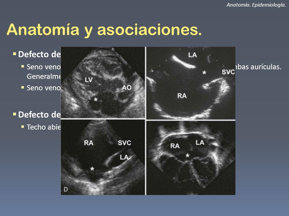 Anatomía y asociaciones.