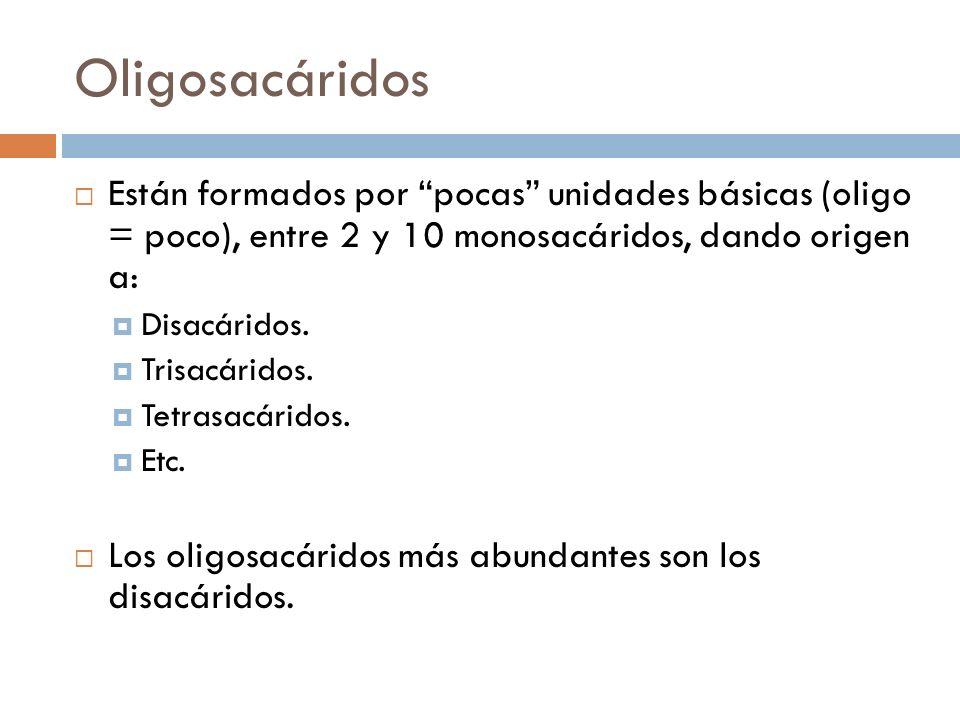 Oligosacáridos Están formados por pocas unidades básicas (oligo = poco), entre 2 y 10 monosacáridos, dando origen a: