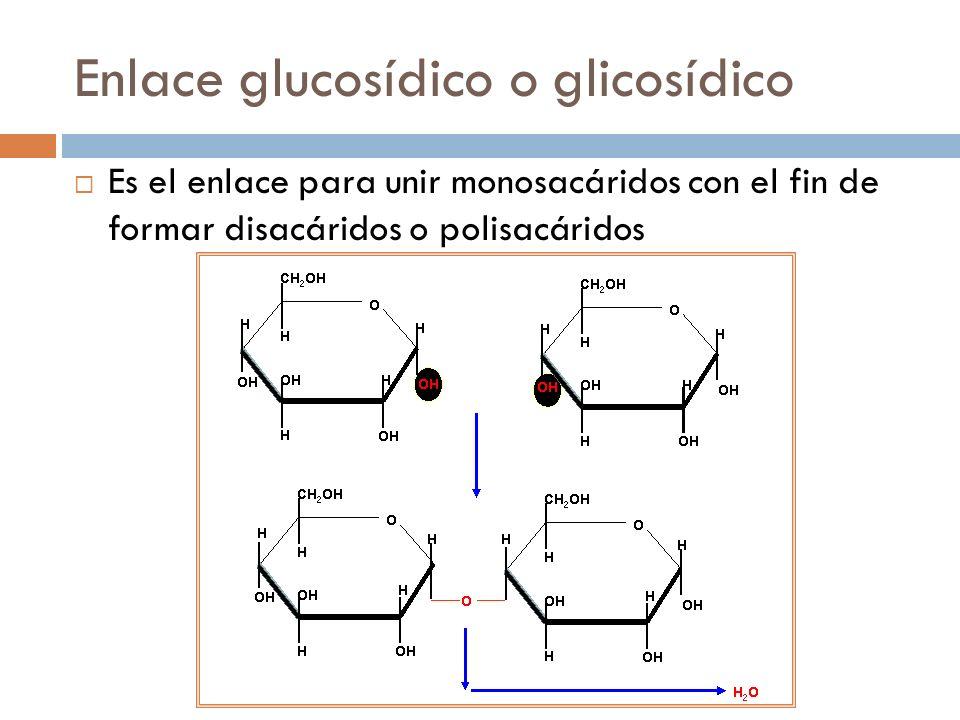 Enlace glucosídico o glicosídico