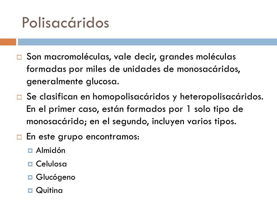 Polisacáridos Son macromoléculas, vale decir, grandes moléculas formadas por miles de unidades de monosacáridos, generalmente glucosa.