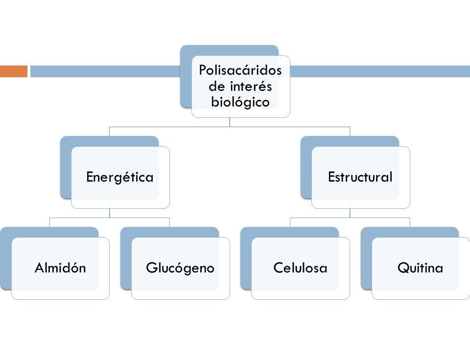 Polisacáridos de interés biológico