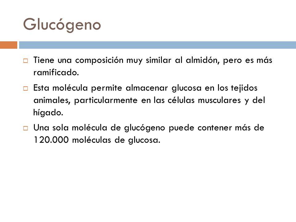 Glucógeno Tiene una composición muy similar al almidón, pero es más ramificado.