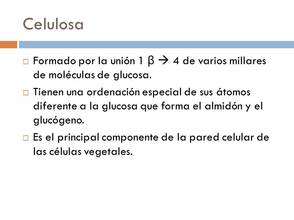 Celulosa Formado por la unión 1 β  4 de varios millares de moléculas de glucosa.