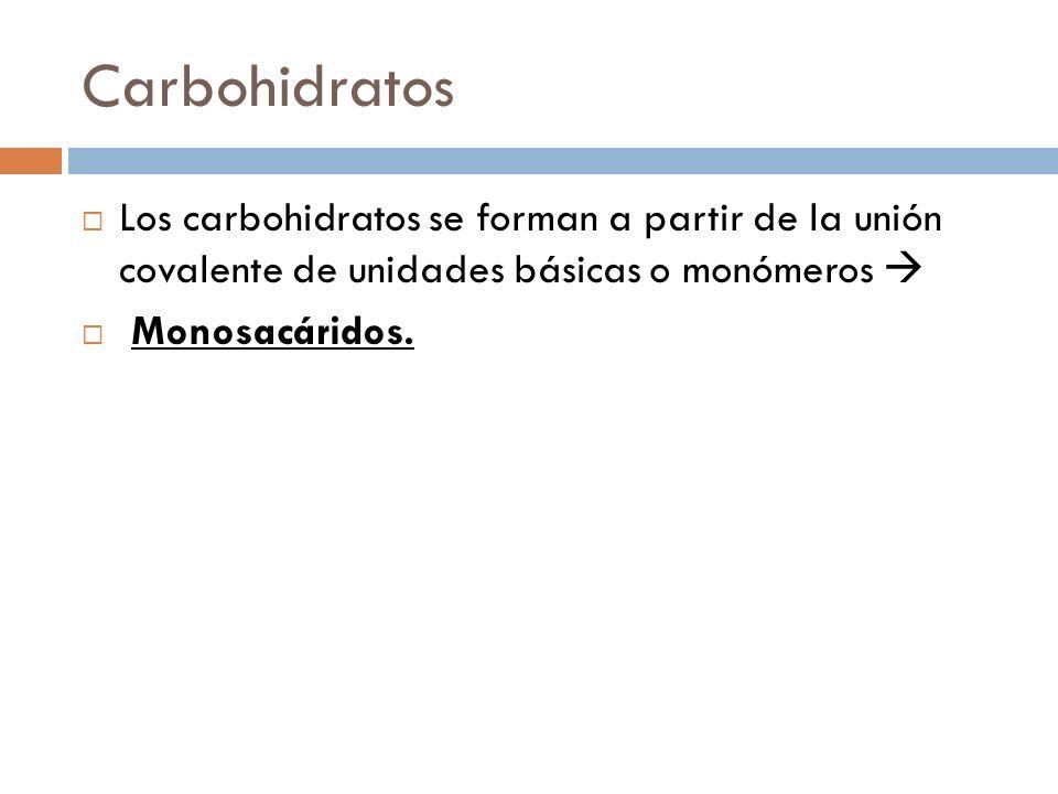 Carbohidratos Los carbohidratos se forman a partir de la unión covalente de unidades básicas o monómeros 