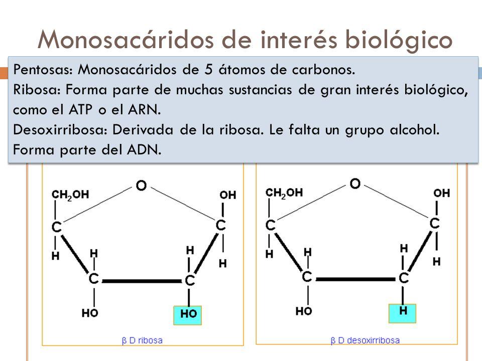 Monosacáridos de interés biológico