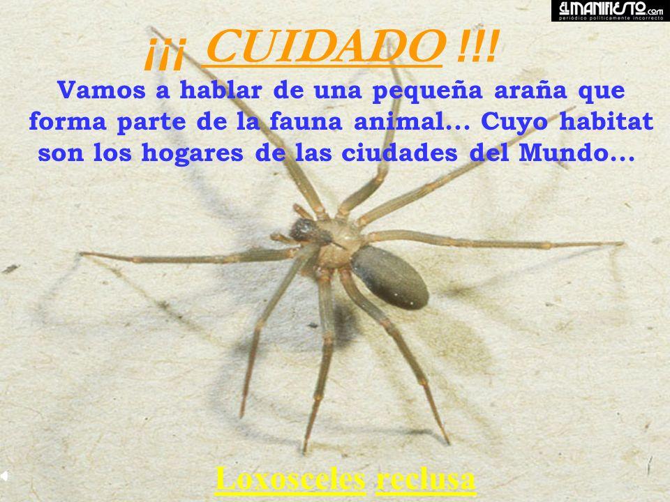 ¡¡¡ CUIDADO !!! Vamos a hablar de una pequeña araña que