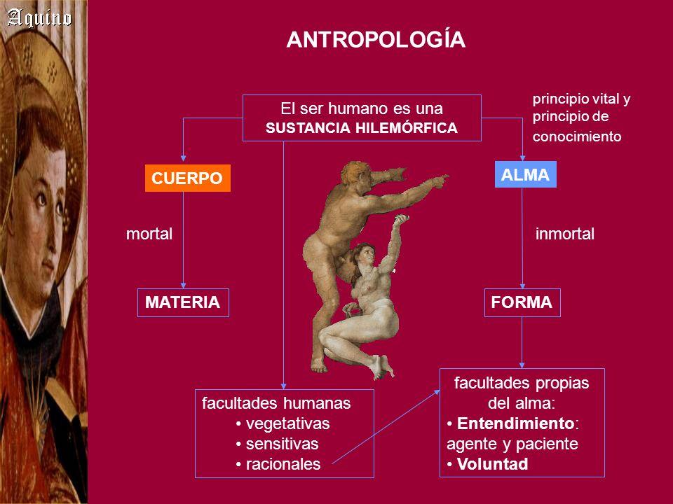 ANTROPOLOGÍA El ser humano es una SUSTANCIA HILEMÓRFICA CUERPO ALMA