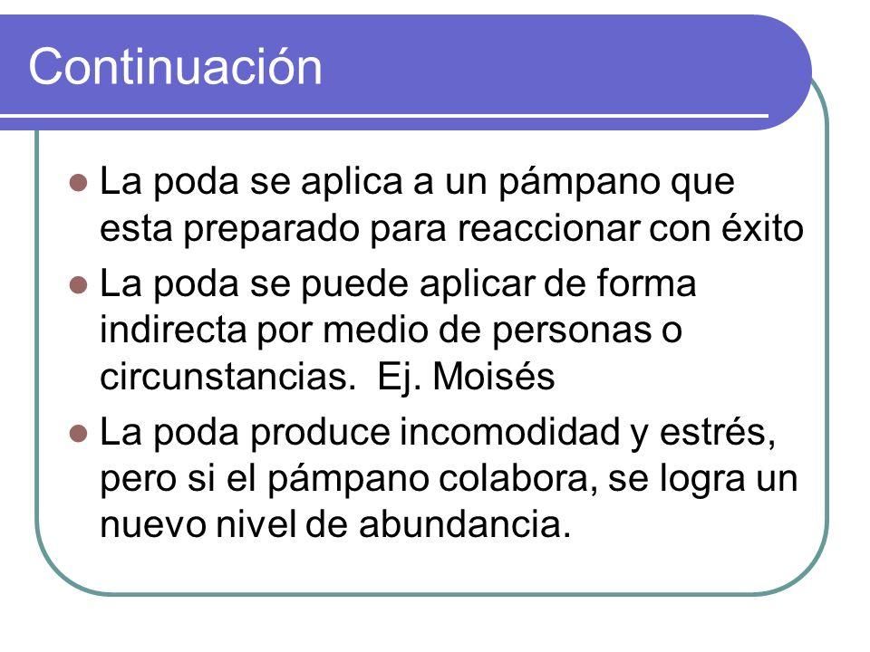 Continuación La poda se aplica a un pámpano que esta preparado para reaccionar con éxito.