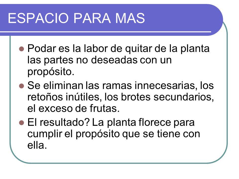 ESPACIO PARA MAS Podar es la labor de quitar de la planta las partes no deseadas con un propósito.