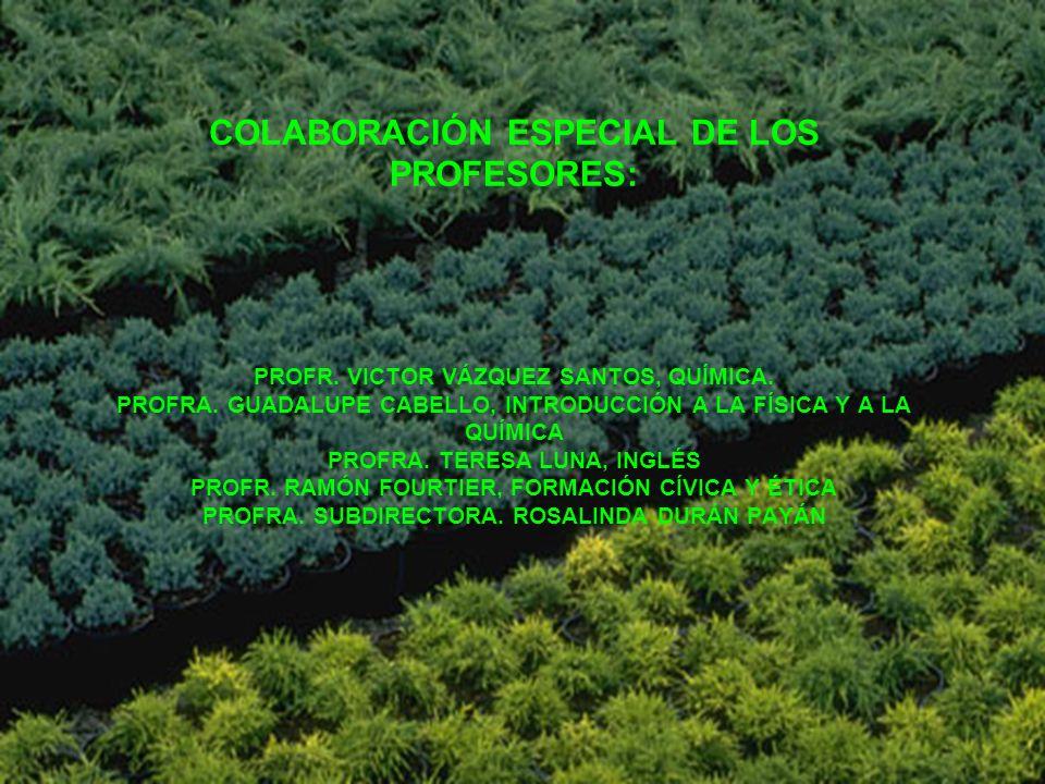 COLABORACIÓN ESPECIAL DE LOS PROFESORES: PROFR