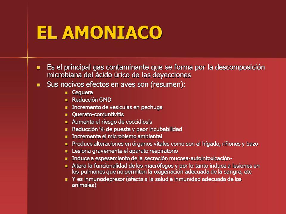 EL AMONIACO Es el principal gas contaminante que se forma por la descomposición microbiana del ácido úrico de las deyecciones.