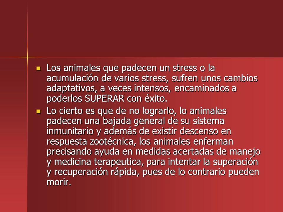Los animales que padecen un stress o la acumulación de varios stress, sufren unos cambios adaptativos, a veces intensos, encaminados a poderlos SUPERAR con éxito.