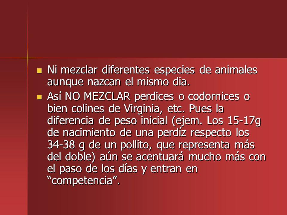 Ni mezclar diferentes especies de animales aunque nazcan el mismo dia.