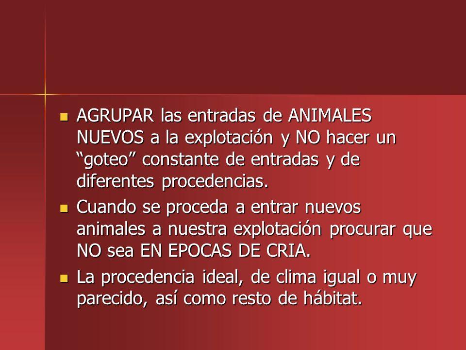 AGRUPAR las entradas de ANIMALES NUEVOS a la explotación y NO hacer un goteo constante de entradas y de diferentes procedencias.