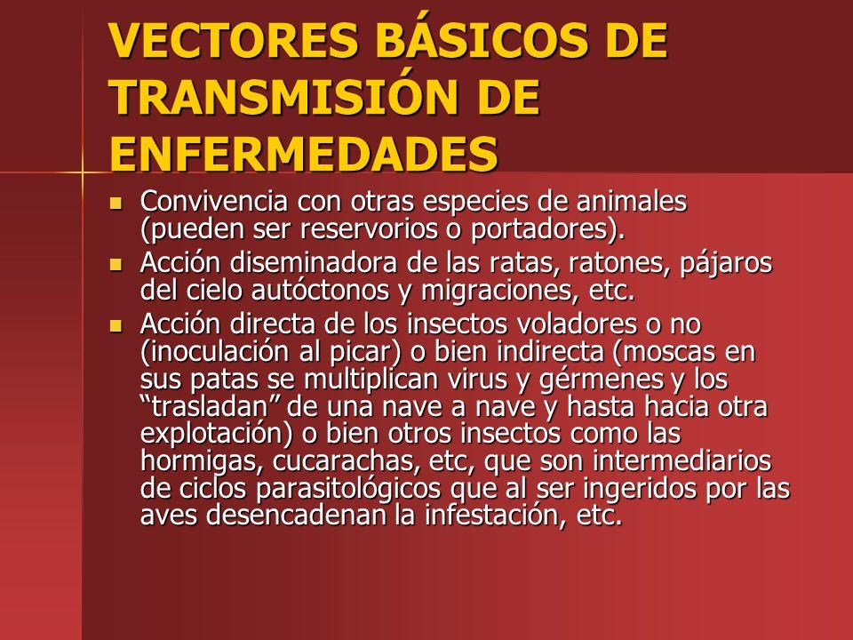 VECTORES BÁSICOS DE TRANSMISIÓN DE ENFERMEDADES