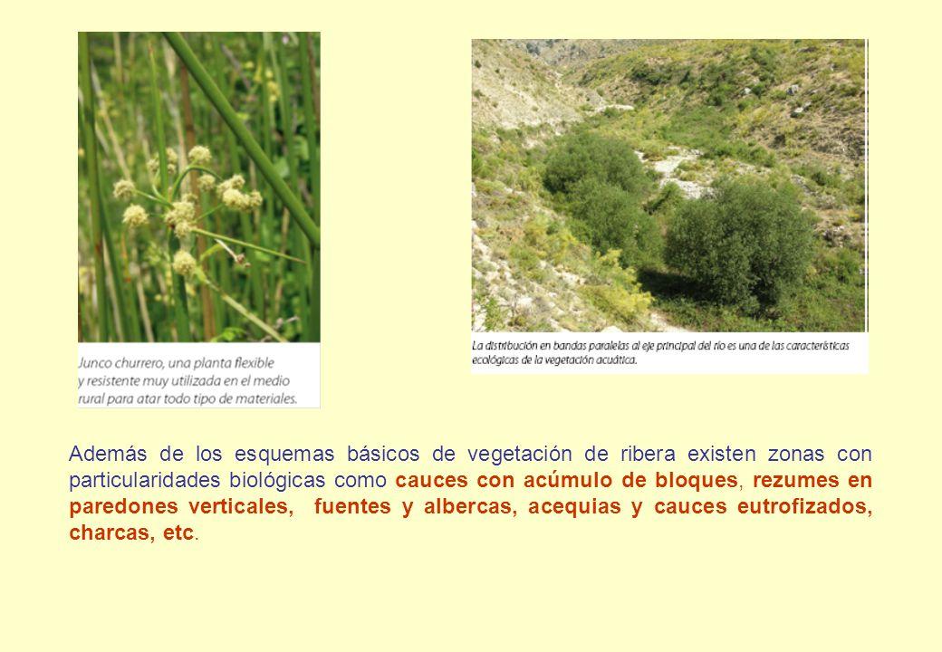 Además de los esquemas básicos de vegetación de ribera existen zonas con particularidades biológicas como cauces con acúmulo de bloques, rezumes en paredones verticales, fuentes y albercas, acequias y cauces eutrofizados, charcas, etc.