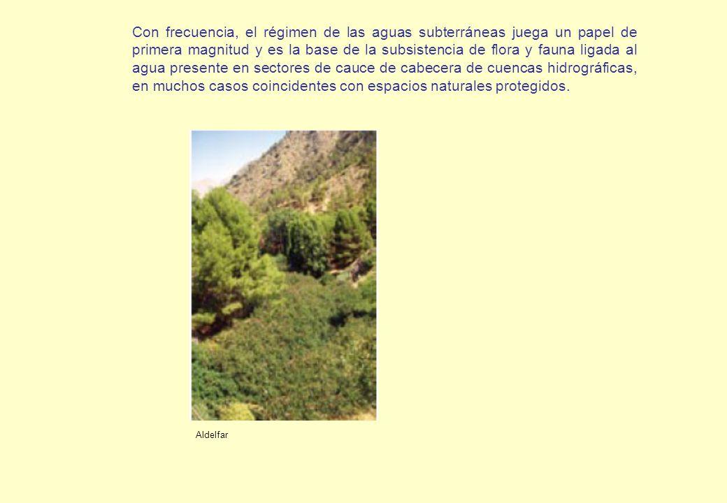 Con frecuencia, el régimen de las aguas subterráneas juega un papel de primera magnitud y es la base de la subsistencia de flora y fauna ligada al agua presente en sectores de cauce de cabecera de cuencas hidrográficas, en muchos casos coincidentes con espacios naturales protegidos.