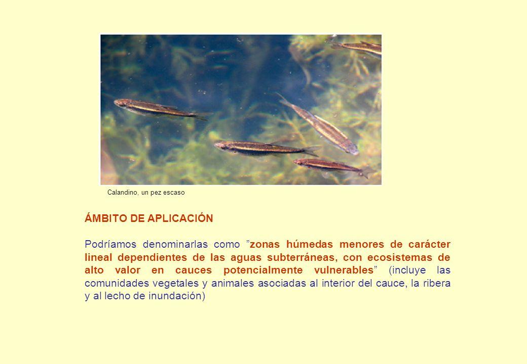 Calandino, un pez escaso