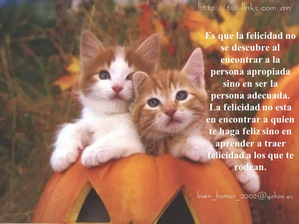 Es que la felicidad no se descubre al encontrar a la persona apropiada sino en ser la persona adecuada.