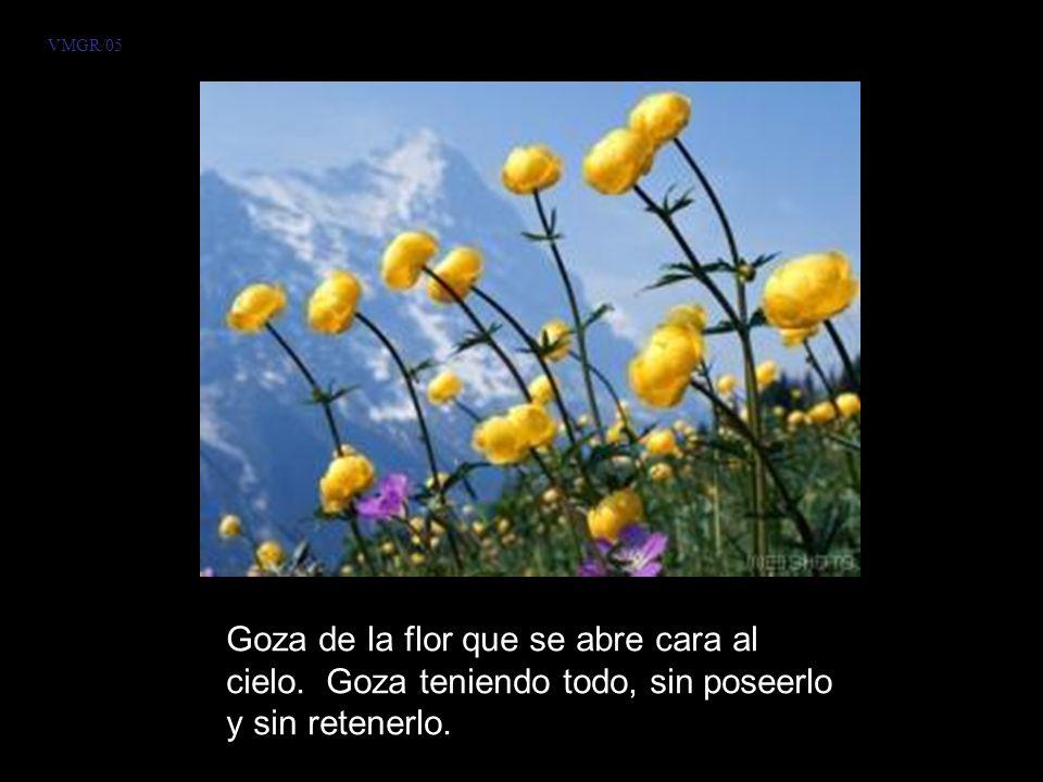 VMGR/05 Goza de la flor que se abre cara al cielo.