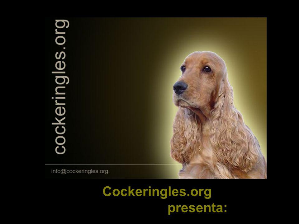 Cockeringles.org presenta: