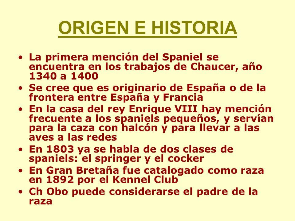 ORIGEN E HISTORIA La primera mención del Spaniel se encuentra en los trabajos de Chaucer, año 1340 a 1400.