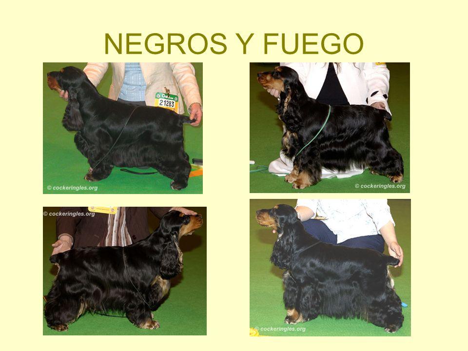 NEGROS Y FUEGO