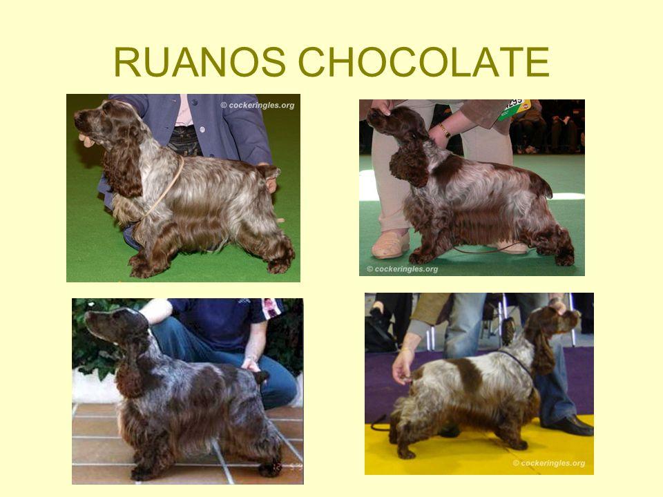 RUANOS CHOCOLATE