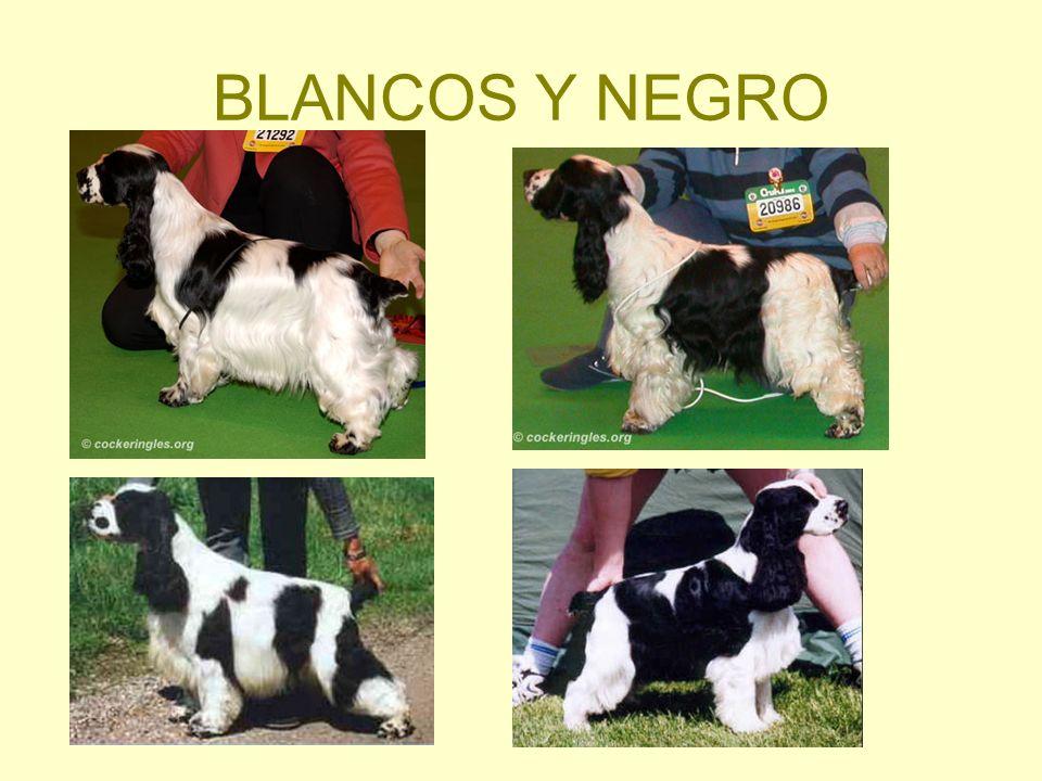 BLANCOS Y NEGRO