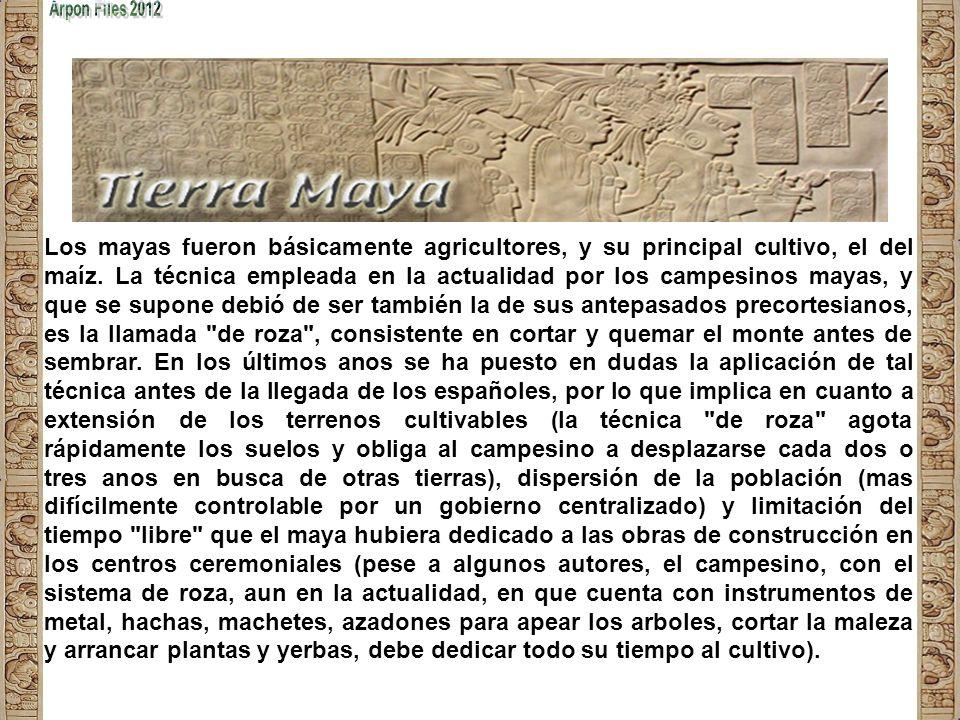 Los mayas fueron básicamente agricultores, y su principal cultivo, el del maíz.