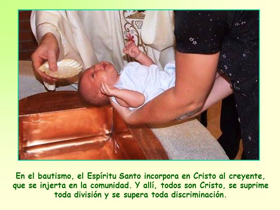 En el bautismo, el Espíritu Santo incorpora en Cristo al creyente, que se injerta en la comunidad.