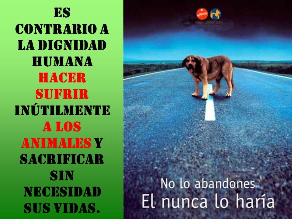 Es contrario a la dignidad humana hacer sufrir inútilmente a los animales y sacrificar sin necesidad sus vidas.