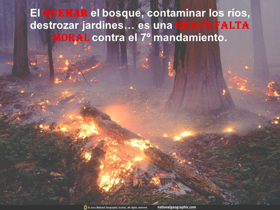 El quemar el bosque, contaminar los ríos, destrozar jardines… es una grave falta moral contra el 7º mandamiento.