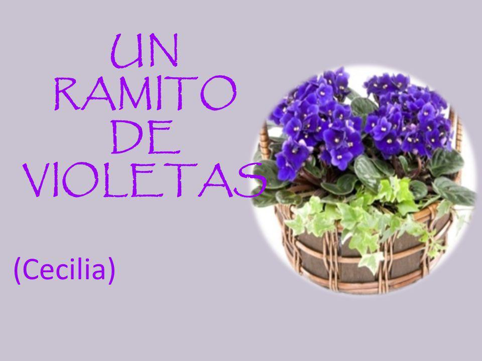 UN RAMITO DE VIOLETAS (Cecilia)