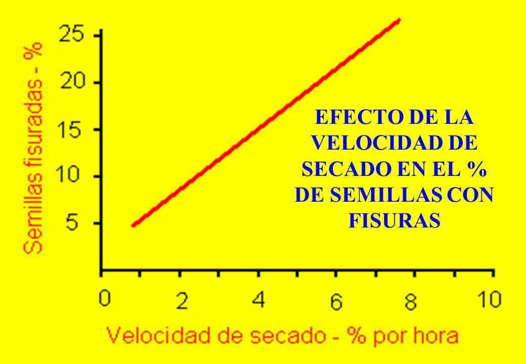 EFECTO DE LA VELOCIDAD DE SECADO EN EL % DE SEMILLAS CON FISURAS
