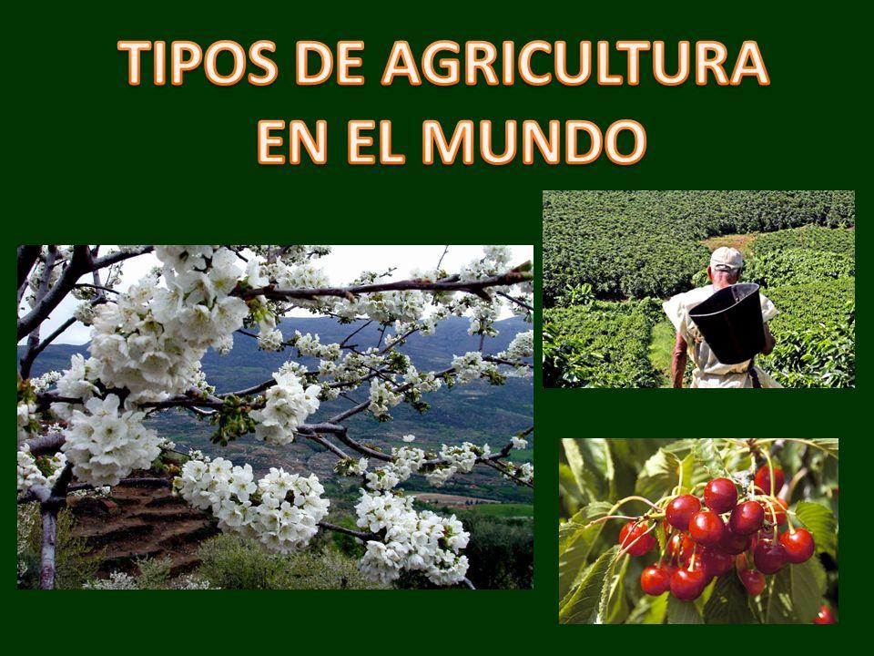 TIPOS DE AGRICULTURA EN EL MUNDO