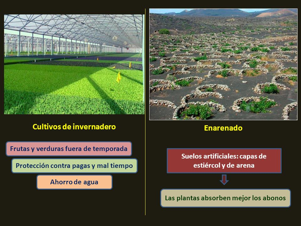 Cultivos de invernadero Enarenado