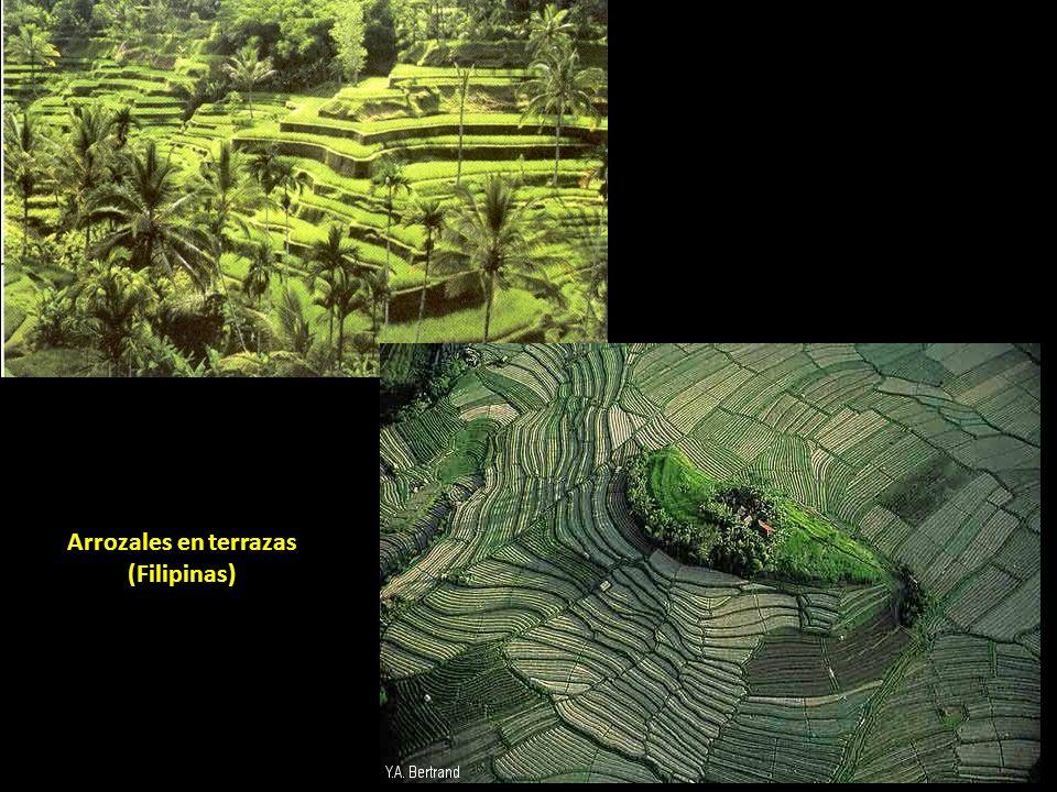 Arrozales en terrazas (Filipinas)