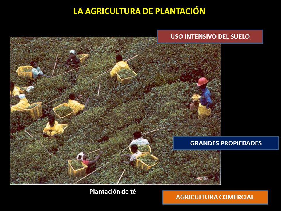 LA AGRICULTURA DE PLANTACIÓN