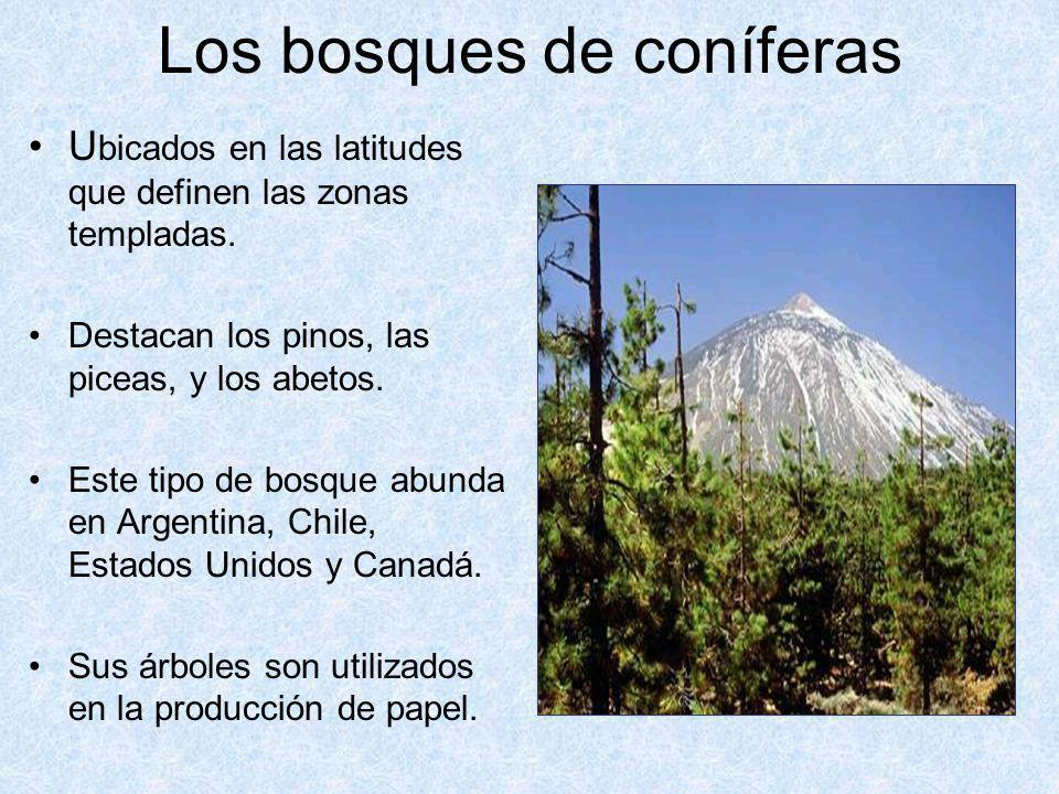 Los bosques de coníferas