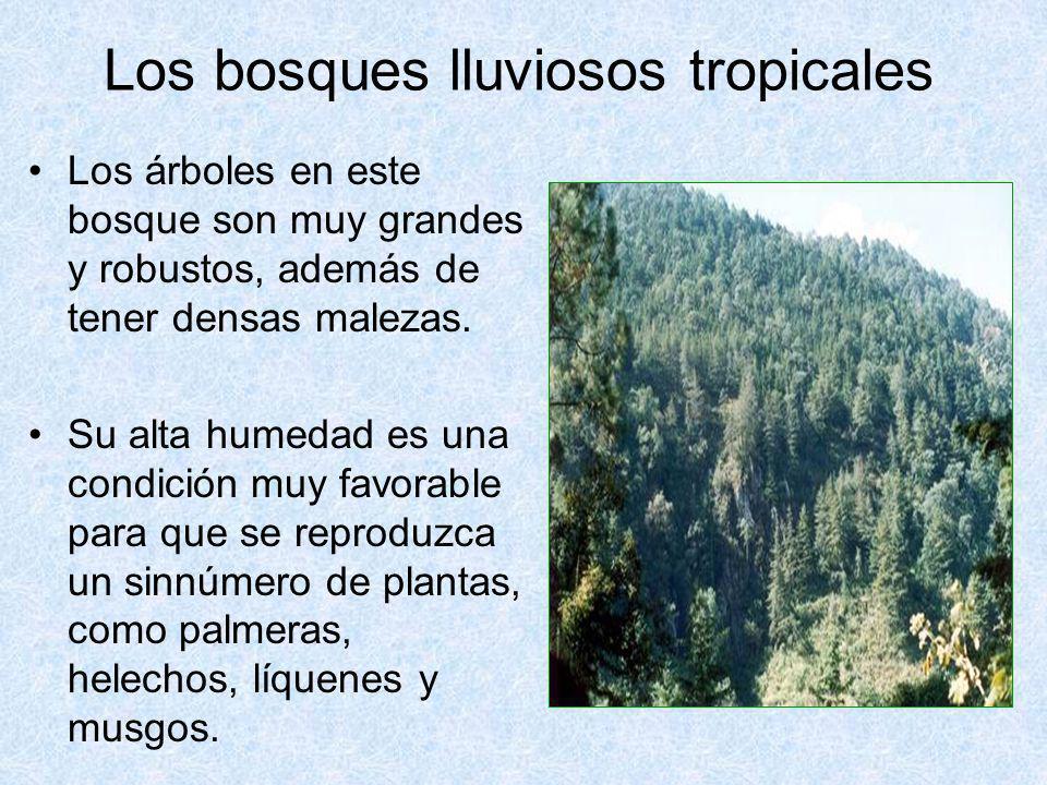 Los bosques lluviosos tropicales