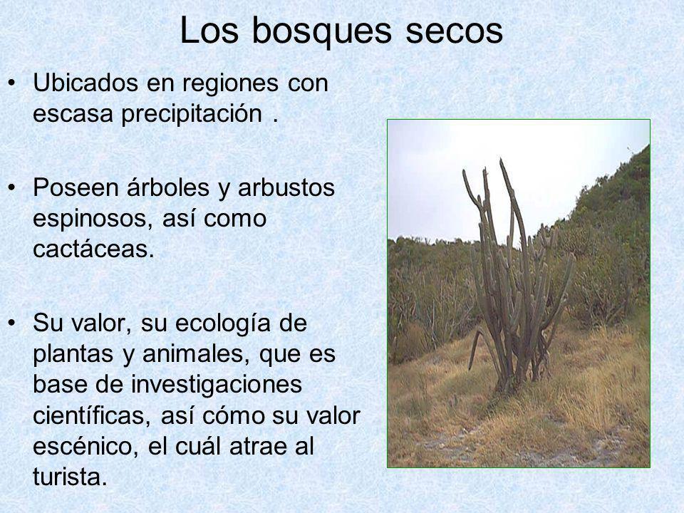 Los bosques secos Ubicados en regiones con escasa precipitación .