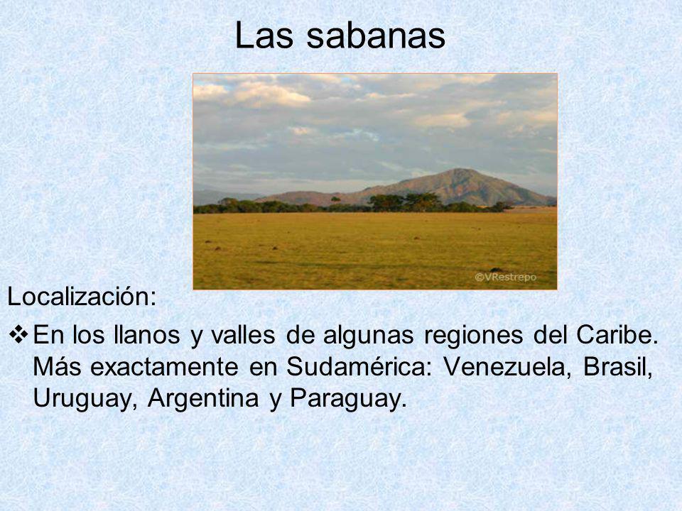 Las sabanas Localización: