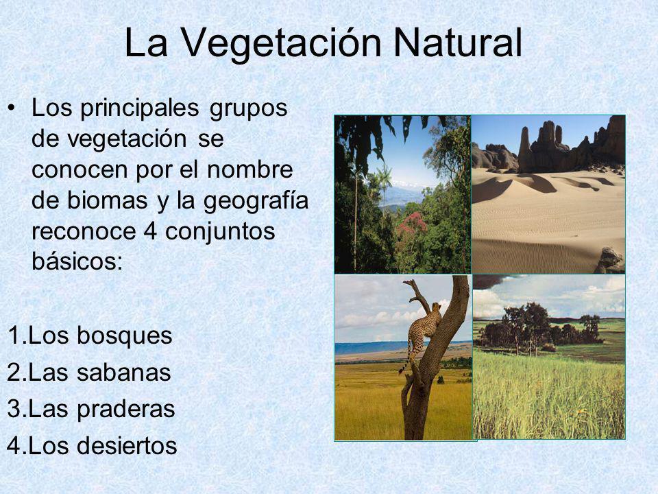 La Vegetación Natural Los principales grupos de vegetación se conocen por el nombre de biomas y la geografía reconoce 4 conjuntos básicos: